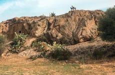 Visite du désert des Agriates en 4x4