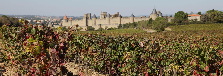 Tour de viñedos y bodegas por Carcasona