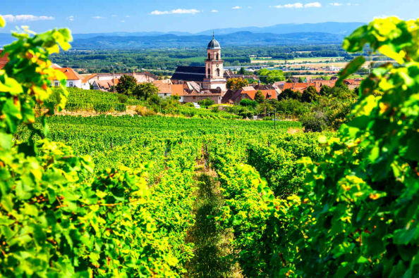 Beautiful views over the vineyeards and villages of Alsace