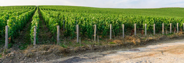 Tour del champán por Épernay, Hautvillers y Mareuil-sur-Ay