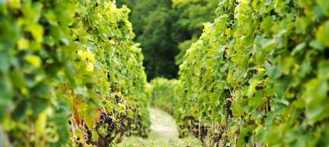 Degustação de vinhos e queijos do Vale do Ródano