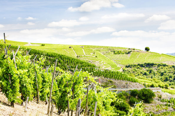 Discover the vineyards