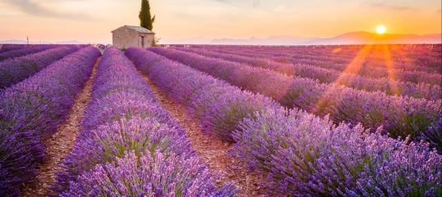 Excursion autour de la lavande à Aix-en-Provence et Valensole