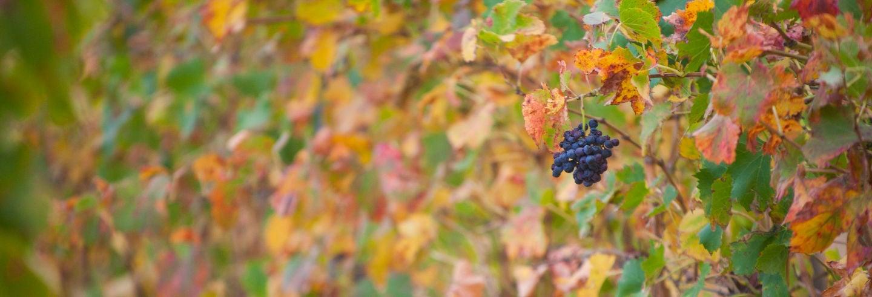 Tour del vino por Cassis y Bandol