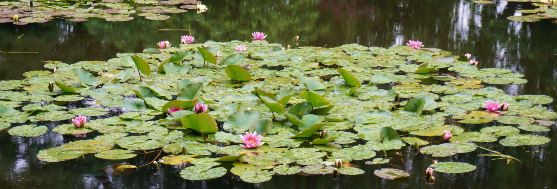 Excursão para a Casa de Monet em Giverny