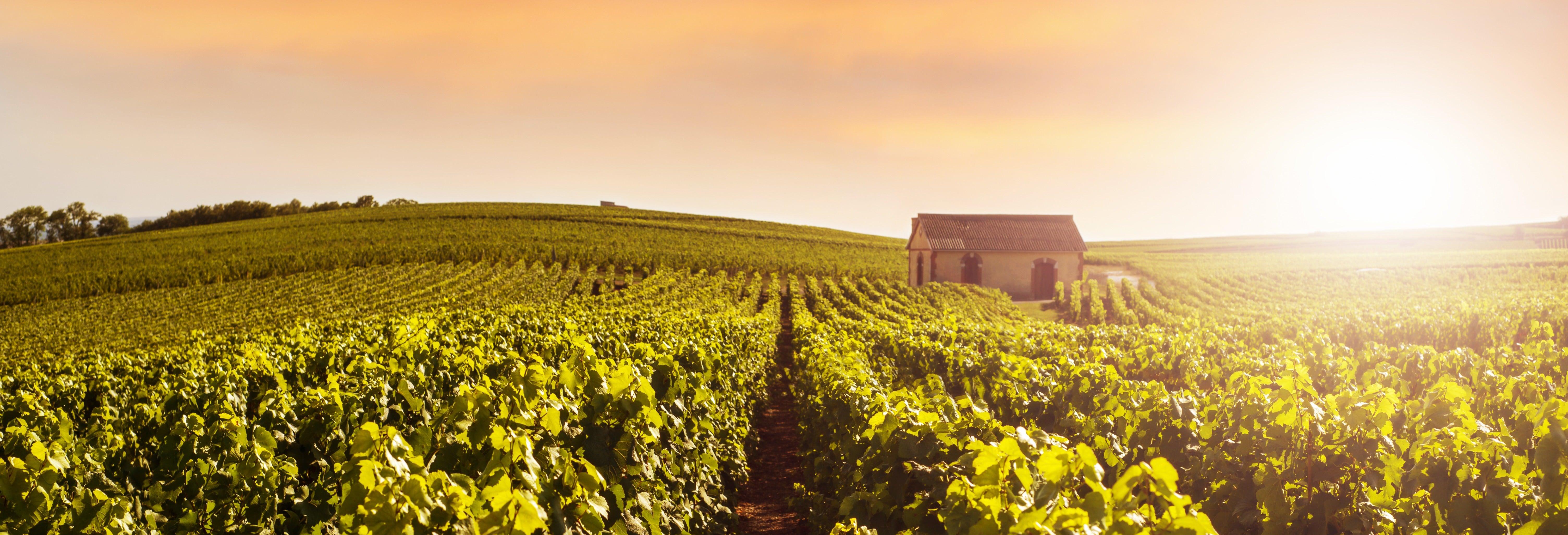 Tour por Reims y la bodega Veuve Clicquot