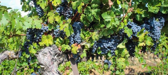 Tour do vinho por Fronton