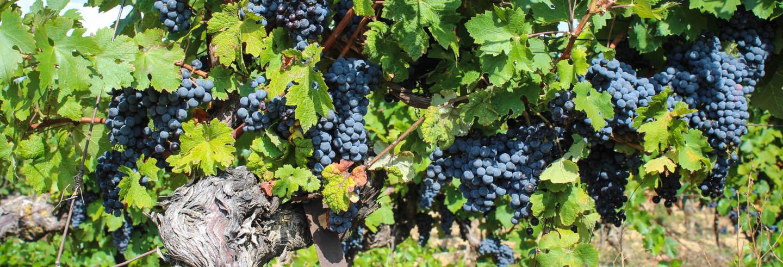 Tour del vino por Fronton