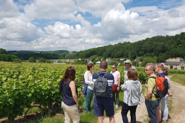 Learn about the vineyards