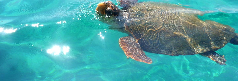 Crociera con avvistamento di tartarughe