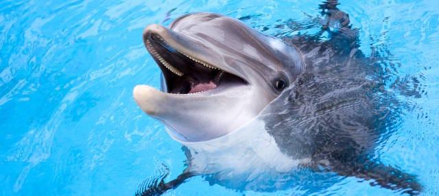 Nado con delfines en Roatán