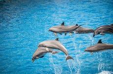 Snorkel en West Bay + Avistamiento de delfines