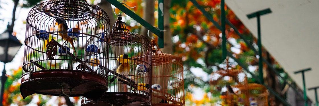 Le Marché aux Oiseaux de Hong Kong