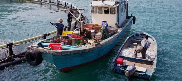 Tour de los pescadores de las islas Sur y Lamma