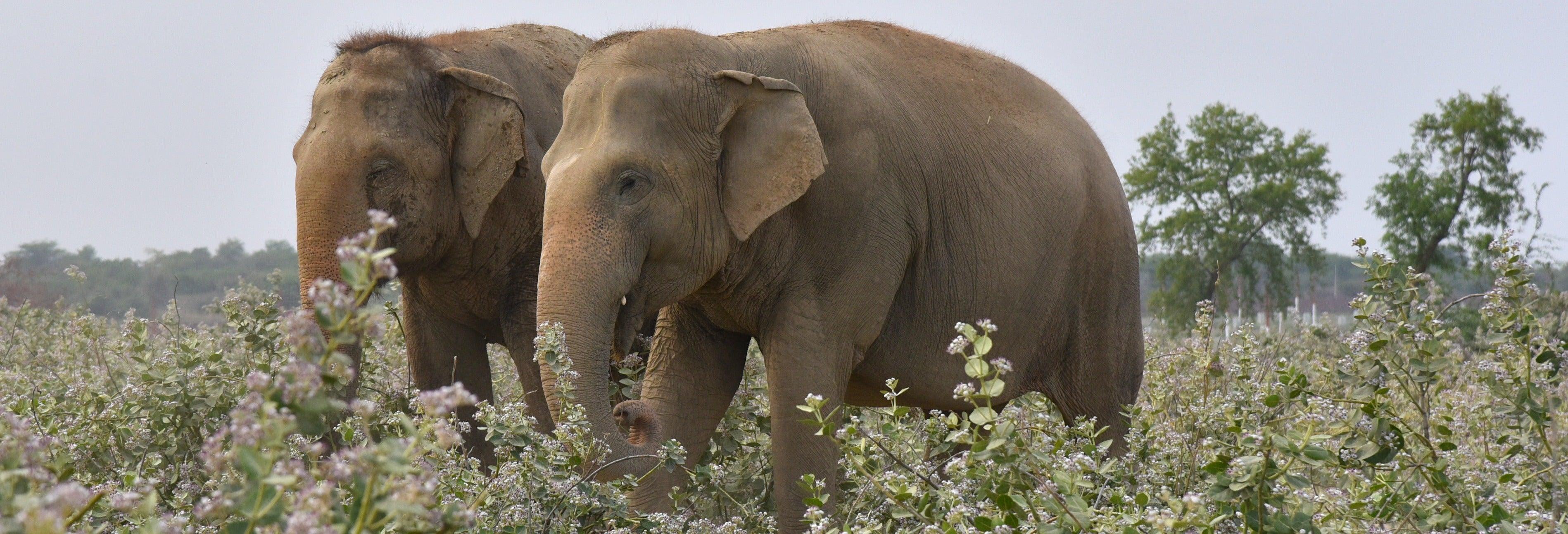 Excursión al Centro de Conservación y Cuidado de Elefantes