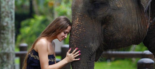Excursion à Elephant Safari Park