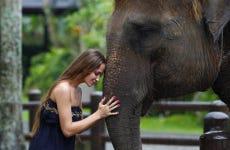 Excursión a Elephant Safari Park