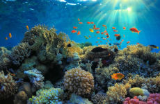 Snorkel em Bali