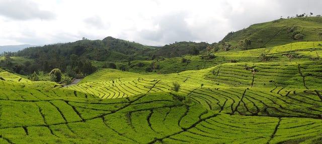 Excursión a las plantaciones de té y cascada Cimahi