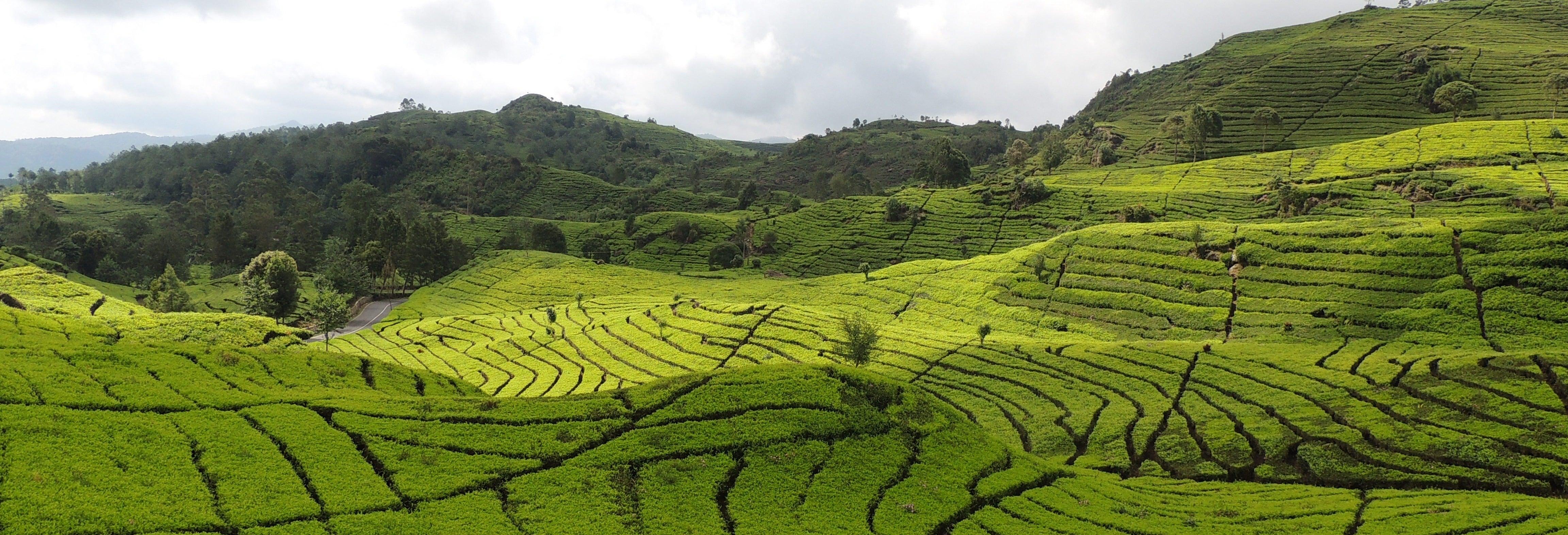 Excursão às plantações de chá e cascata Cimahi