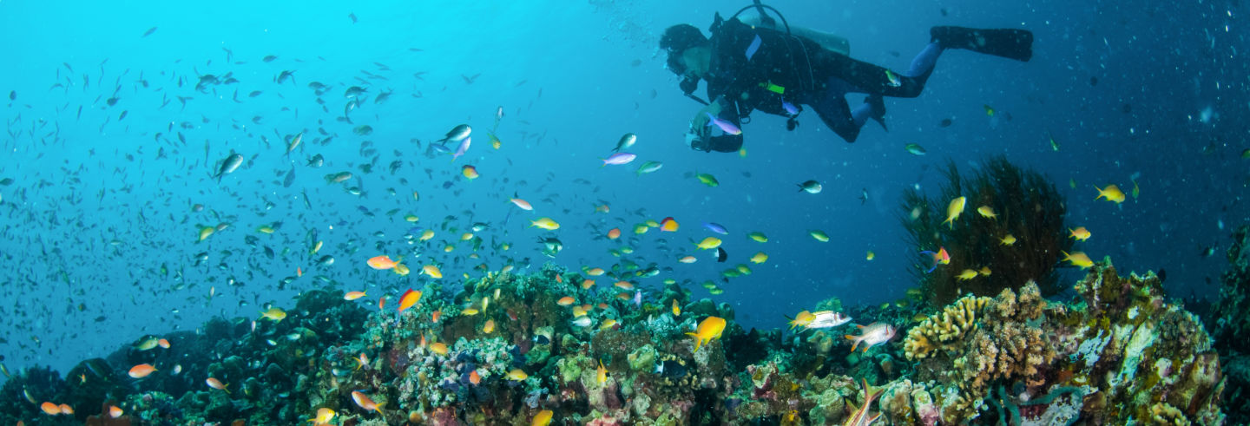 Bautismo de buceo en Lombok