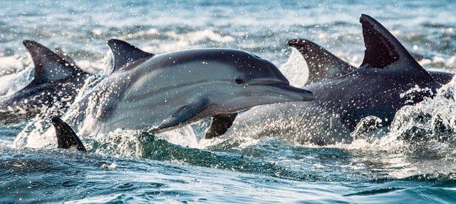 Nager avec des dauphins à Rivière Noire