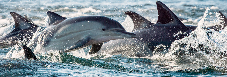 Bagno con i delfini a Black River
