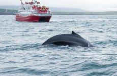 Avistamiento de ballenas en Akureyri