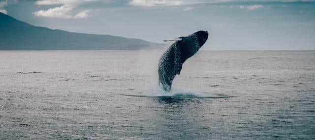 Avistamiento de ballenas en Hauganes