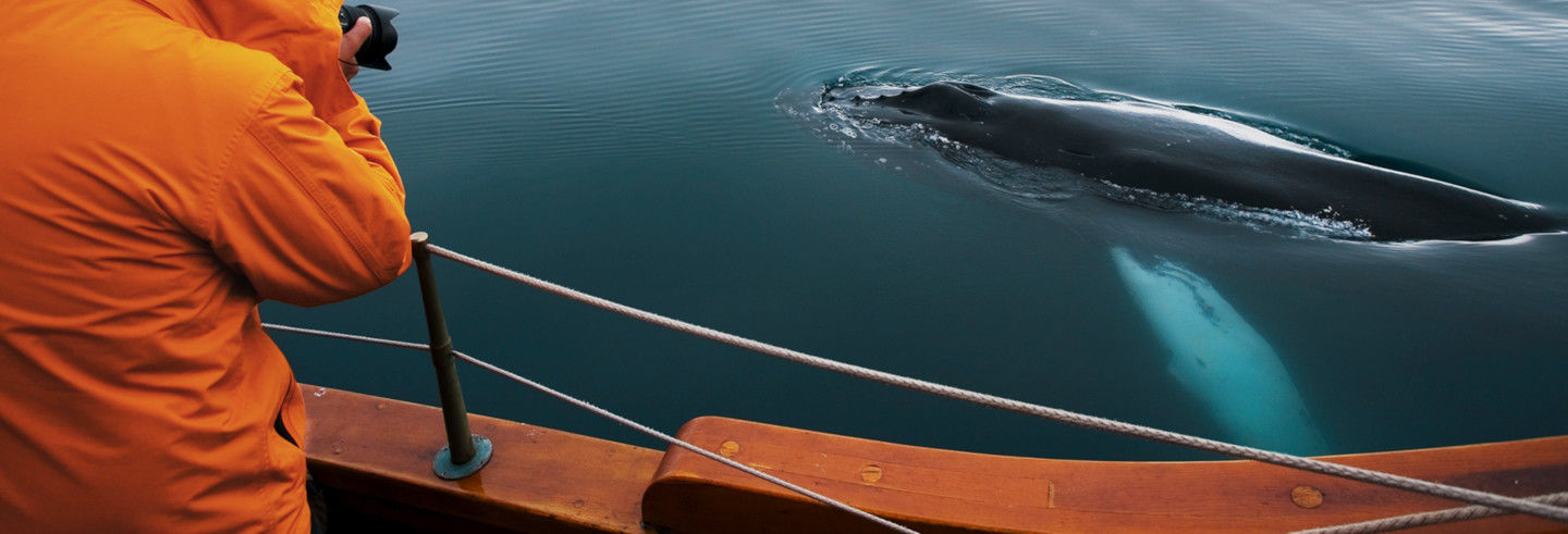 Eco Boat Whale Watching