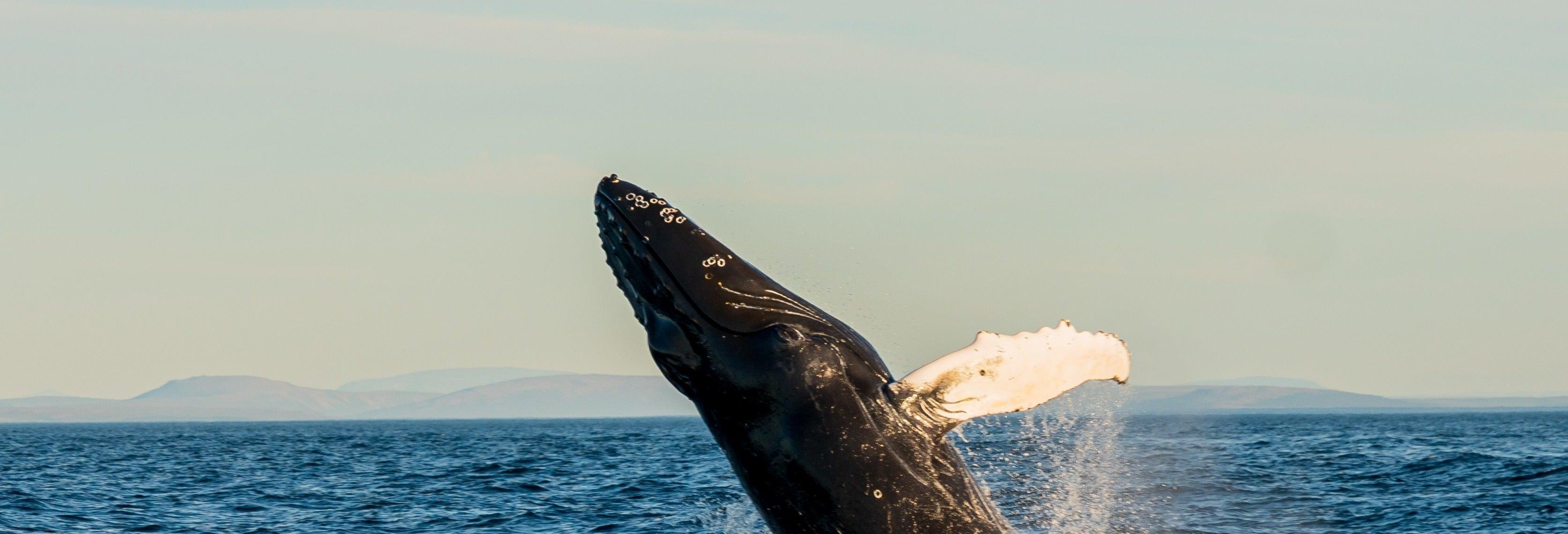 Avistamiento de ballenas en barco ecológico