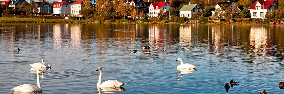 Lac Tjörnin