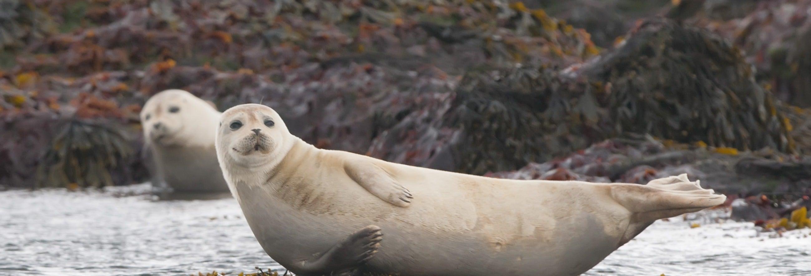Avistamento de focas em Raudasandur