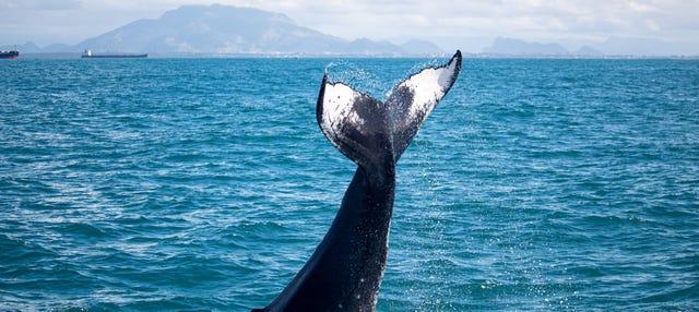 Avistamento de baleias de lancha rápida