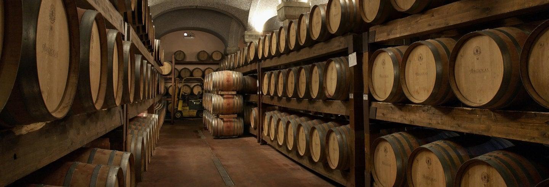 Argiolas Winery Trip