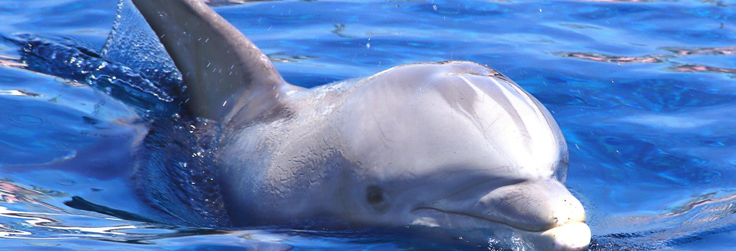 Osservazione di delfini e balene