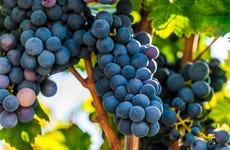 Degustazione di vino nella Valle d'Itria