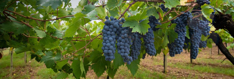 Mamoiada Winery Tour