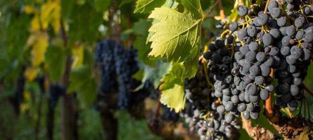 Tour del vino a Montalcino