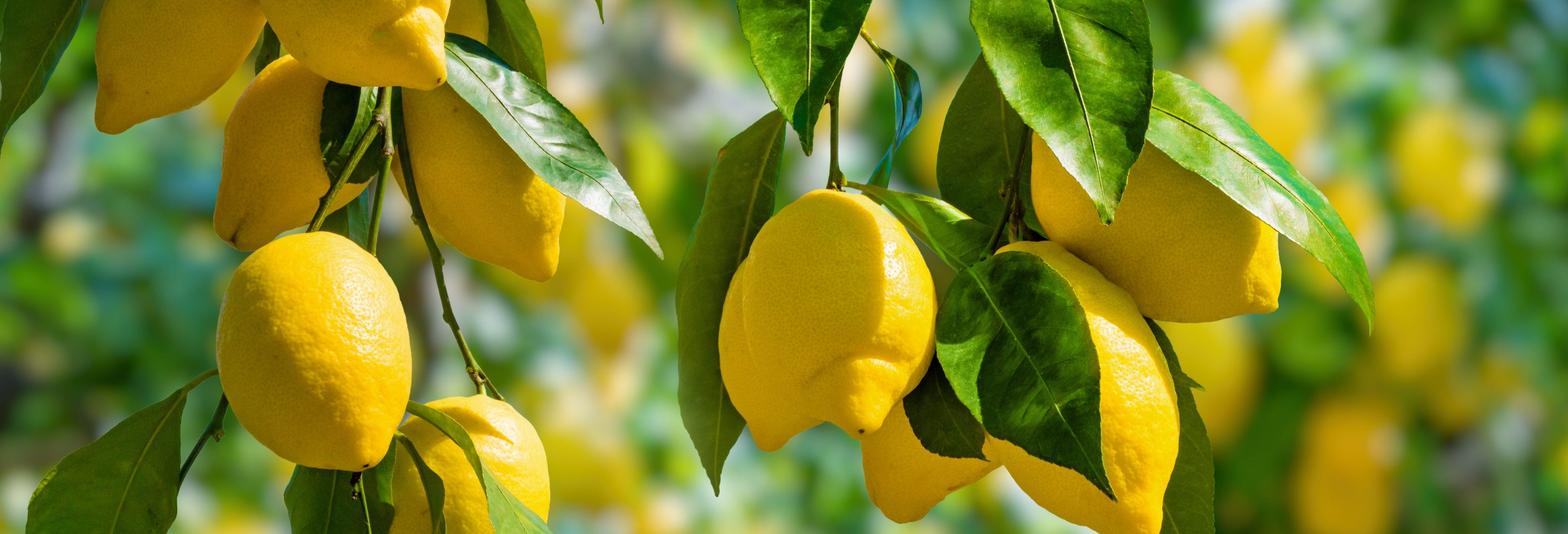 Tour del limón