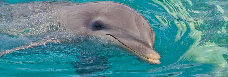 Bagno con i delfini a Montego Bay