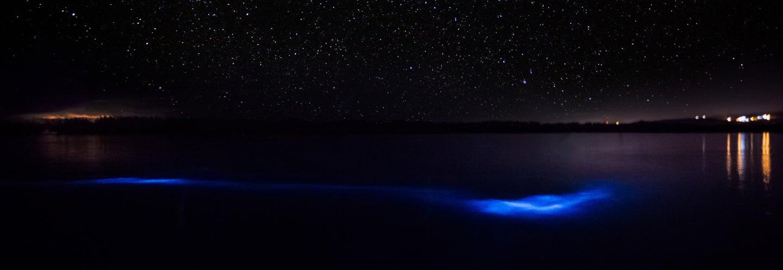 Excursión nocturna a la Laguna Luminosa