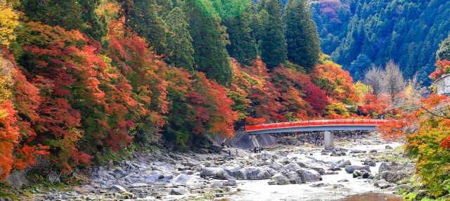 Korankei Valley, Eiho Temple and Toki Premium Outlet Tour
