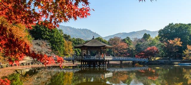 Tour privado por Nara con guía en español