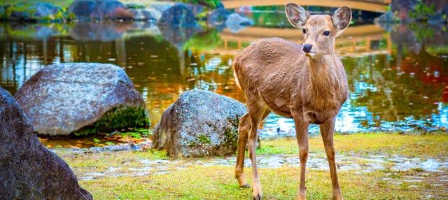 Excursión a Kioto, Nara y Kobe