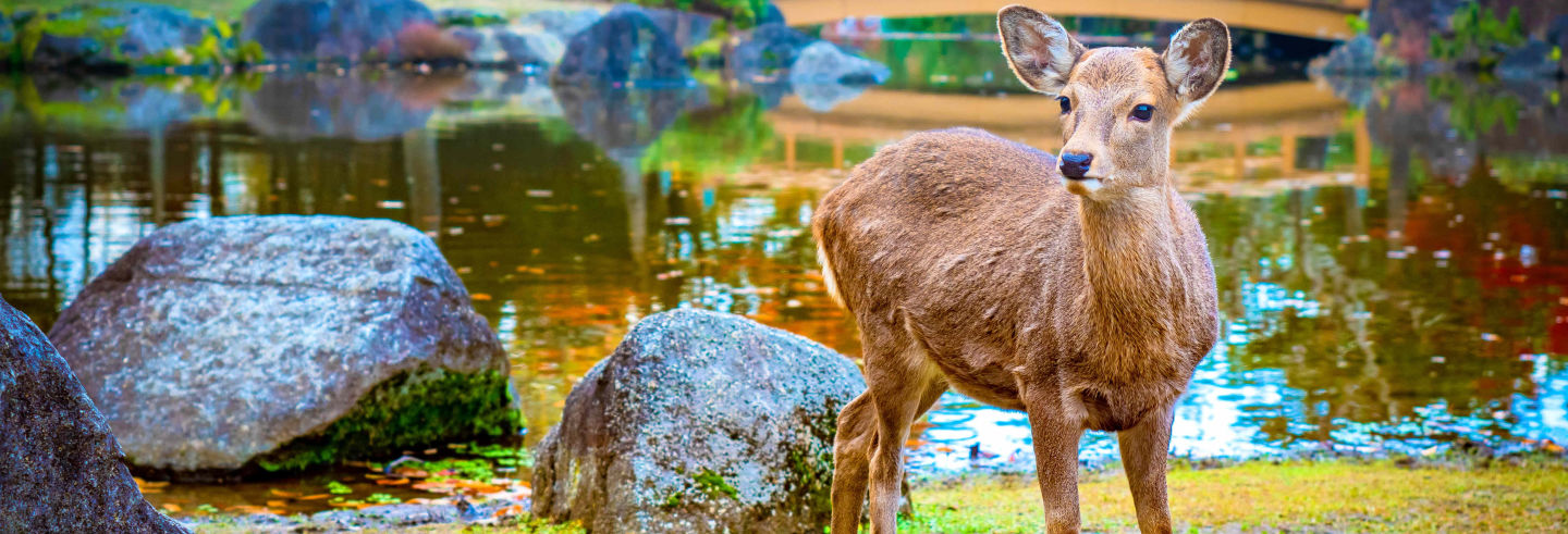 Excursion à Kyoto, Nara et Kobe