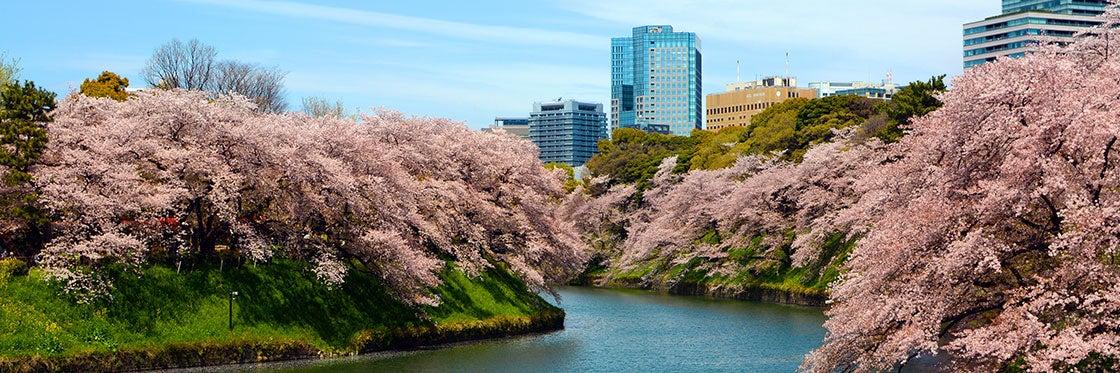 Le climat à Tokyo