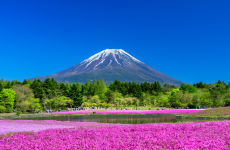 Mount Fuji & Fruit Picking Day Trip