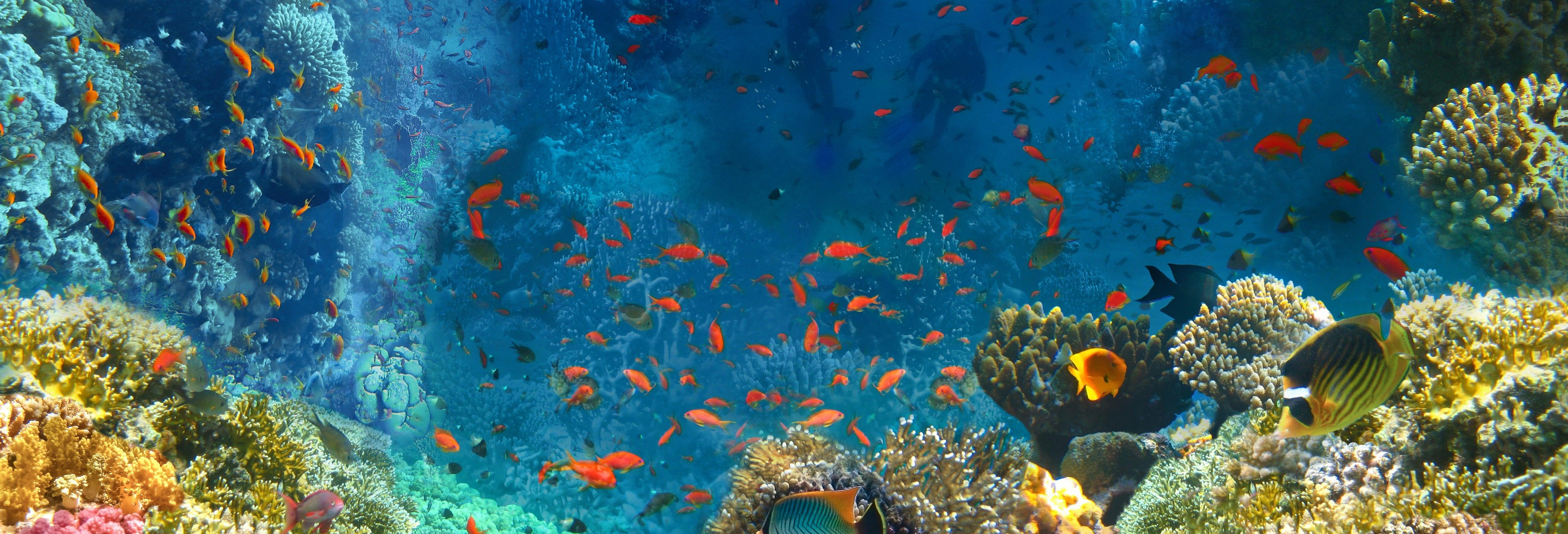 Snorkel en el mar Rojo