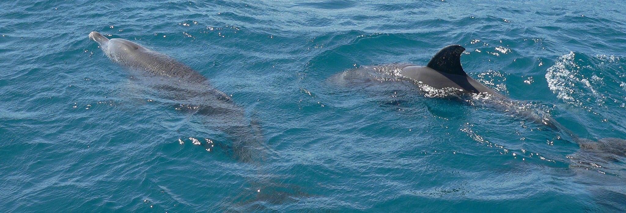 Avvistamento di delfini al Parco Nazionale Marino Kisite